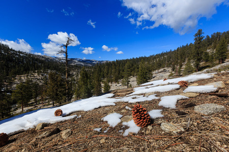 snows: Pine cones and snows at Upper Yosemite Fall Trail in good sunny weather Stock Photo