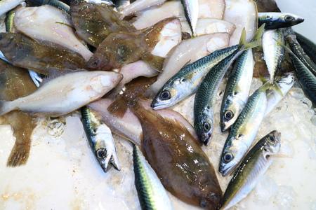 fish market: Fresh raw seafood selling at fish market at Newport Beach Stock Photo