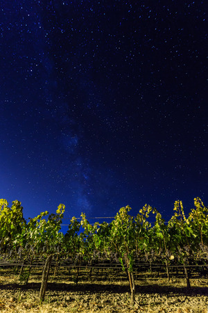 wine country: Milky way over vineyards in Californias wine country. Napa Valley, California