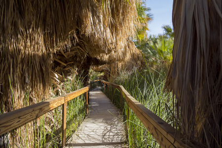 Wooden bridge and Palm trees at Coachella Valley Preserve