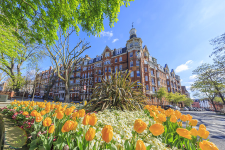 resident: Beautiful tulip garden and resident at London, United Kingdom