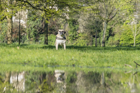 hyde: Dog with reflection at Hyde Park, United Kingdom Stock Photo