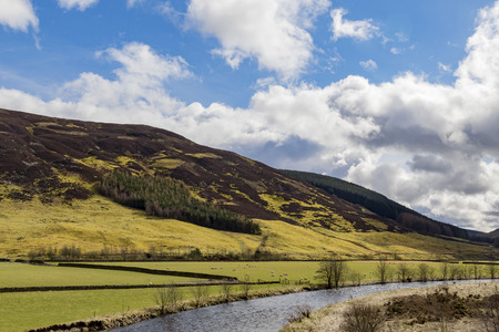 country side: Beautiful country side view with sheeps, river at Highland, Scotland