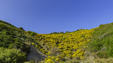 gabriel: Beautiful yellow wild flower at San Gabriel Mountain Stock Photo