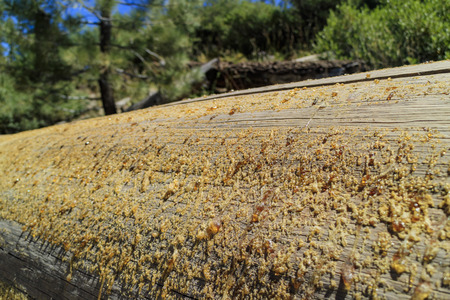 inyo national forest: honey on wood