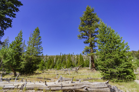 inyo national forest: landscape with many trees in Devils Postpile National Monument