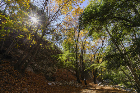 fall color of Switzer Falls Trail, Los Angeles, California Stock Photo