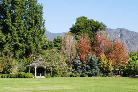 Arbor and trees with fall color, saw at Arcadia, Los Angeles, California Stock Photo