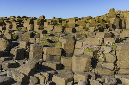 Flower glow at the famous ancient volcanic eruption - Giant's Causeway of County Antrim, Northern Ireland 版權商用圖片