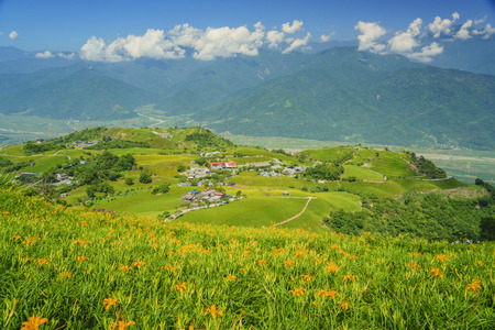 Aerial view of the  Daylily flower at sixty Stone Mountain in Hualien, Taiwan