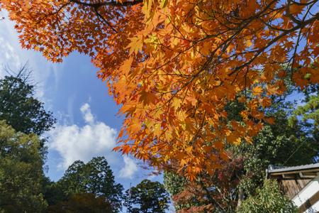 Hiyoshi Taisha at Otsu, Shiga, Japan Stok Fotoğraf - 91572301