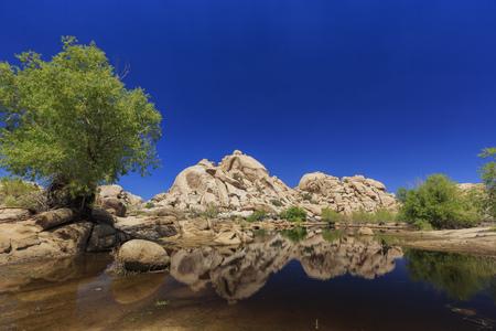 Landscape in Joshua Tree National Park, morning