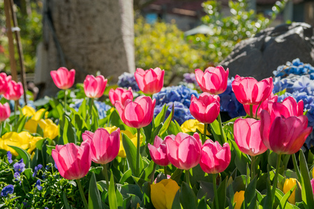 Morning view of colorful tulips blossom in downtown