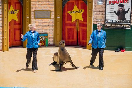 San Diego, JUN 27: Sea Lion and Otter Stadium show in the famous SeaWorld on JUN 27, 2018 at San Diego, California