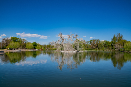 Many birds standing on a tree in the duck lake at Denver, Colorado
