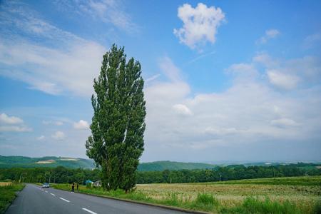 The famous Ken & Mary Tree at Hokkaido, Japan