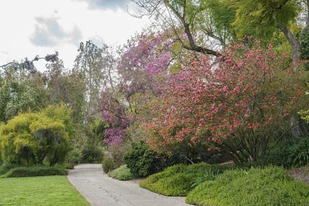 Natural scene around Huntington Library at Los Angeles, California