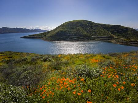 Viele wilde Blumen blühen am Diamond Valley Lake, Kalifornien