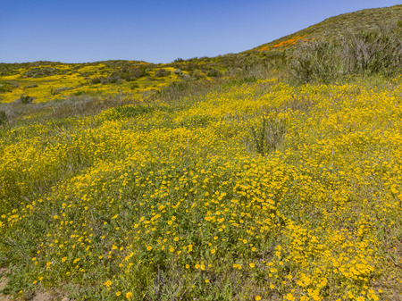 Lots of wild flower blossom at Diamond Valley Lake, California