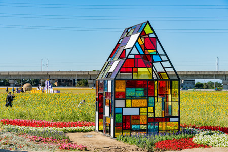 Taiwan, DEC 25: Wild flower bloom with colorful glass house on DEC 25, 2018 at Taiwan 新聞圖片