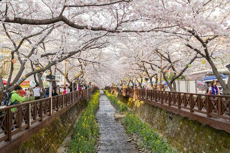 Busan, 3 avril : Cherry Tree Blossom et Jinhae Gunhangje Festival le 3 avril 2014 à Busan, Corée du Sud Éditoriale