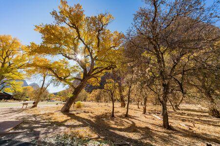 Beautiful autumn landscape around Zion National Park at Utah