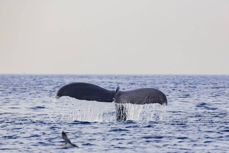 Humpback Whale watching in Los Angeles