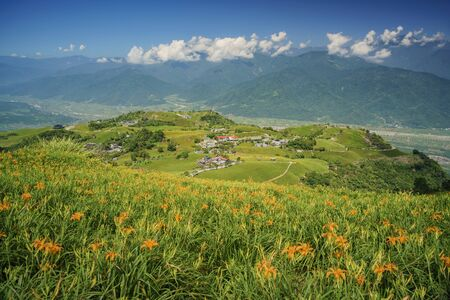 The famous and beautiful Daylily flower at sixty Stone Mountain in Hualien, Taiwan