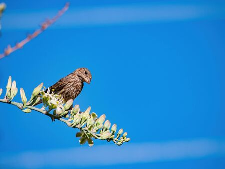 Close up shot of a cute sparrow on a brunch at Henderson, Nevada