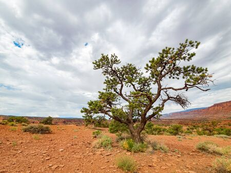 Beautiful landscape around the Panorama Point of Capitol Reef National Park at Utah