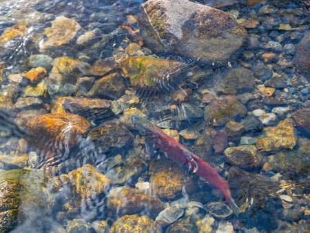 Photos Taken in Lake Tahoe Area