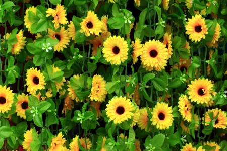 Yellow flowers of Thailand