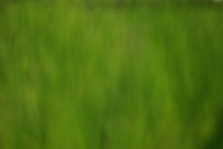 Soft green background.