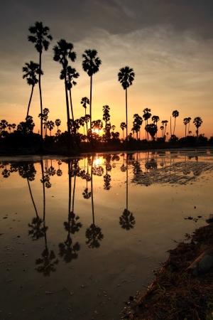 Palm sunset water reflection  Stock Photo
