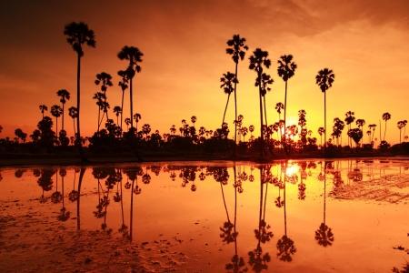 Palm sunset water reflection. Stock Photo