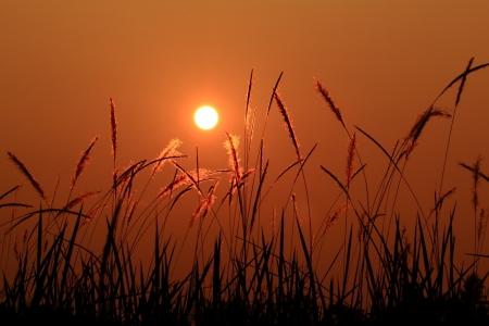 Central Sunset Meadows. Stock fotó