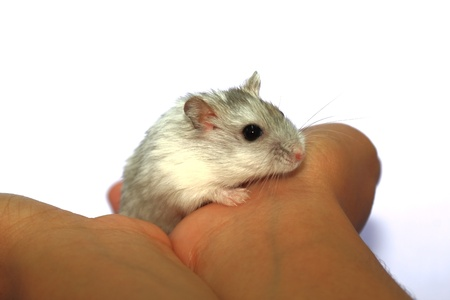 hamsters: Close-up of baby hamsters being held in hand Stock Photo
