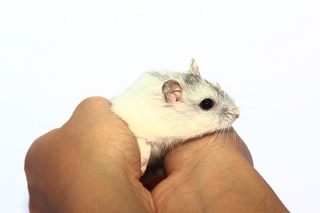 Close-up of baby hamsters being held in hand Stock Photo - 18507217