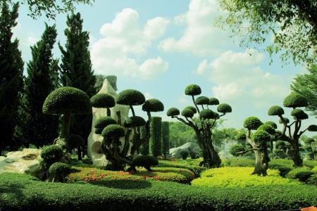 ornamental bush: Ornamental garden
