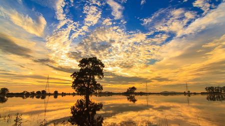 tree silhouette, Thailand