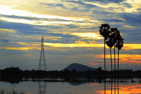 row of tropical sugar palm tree silhouette, Thailand