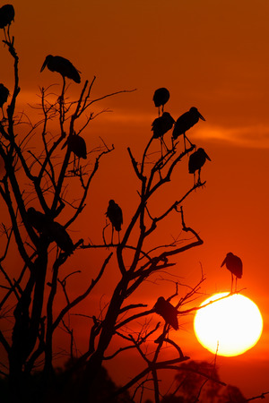 sunset with birds in Thailand