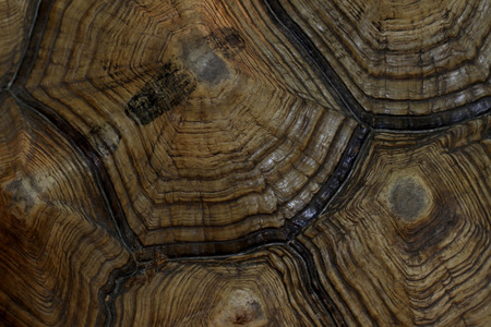 animal turtle shell pattern texture Stock Photo