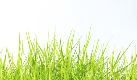 Grass isolated white background