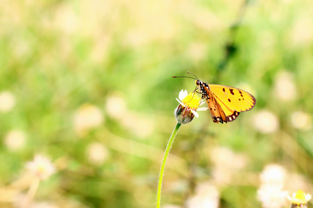 Yellow Butterfly on flowers photo