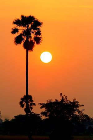 Palm sunset water reflection.