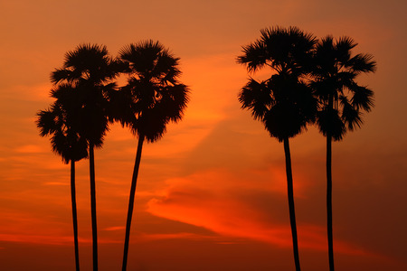 Palm silhouette at twilight