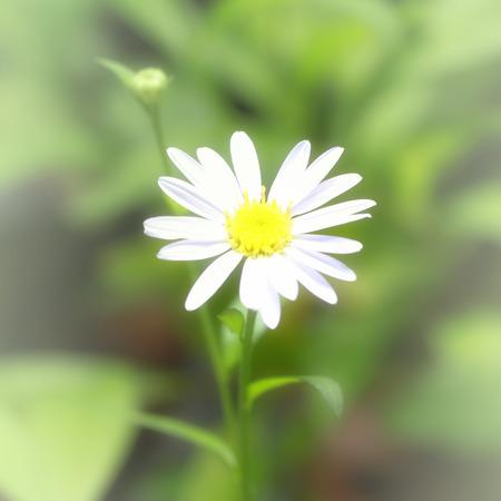 flower the softfocus