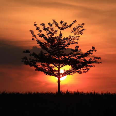 Sunset silhouette of Tree