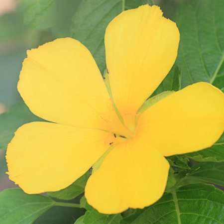 Yellow flowers in softfocus Stock Photo